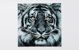 FACE TIGER Quadro in vetro 80x80