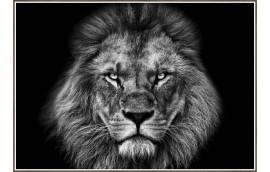 LION KING Stampa incorniciata 100x70